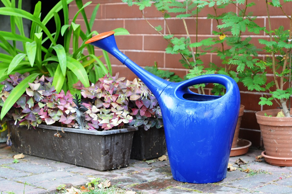 watering-can-887714_960_720